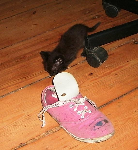 котенок и тапок