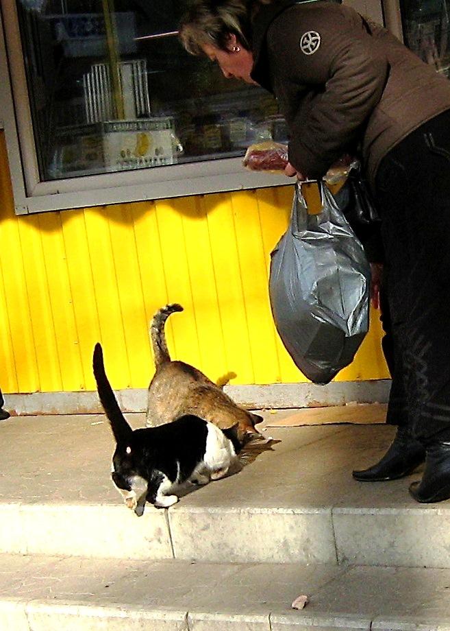 кошки у киоска