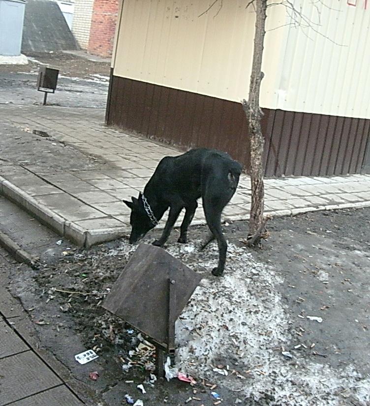 Собака возле мусорки